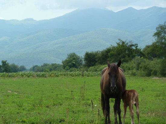Estancia San Agustin:                   Mère et fille