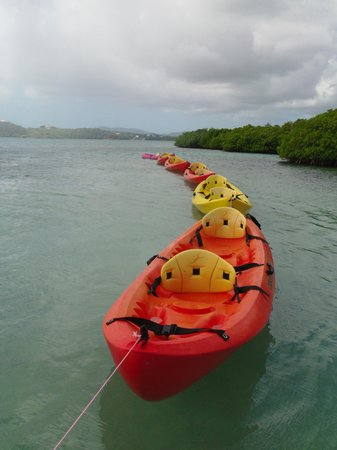 Paddles Snorkel and Kayak Eco Adventure照片