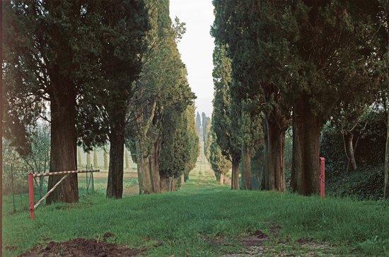 La Casalta:                   La via trionfale dei cipressi che solo a gurdarla ti mette paca