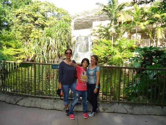 Jungle Island:                   Parrot Jungle