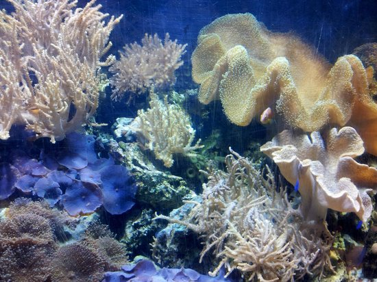 Scarborough SEA LIFE Sanctuary:                   One of the aquariums with fish darting in & out of the coral