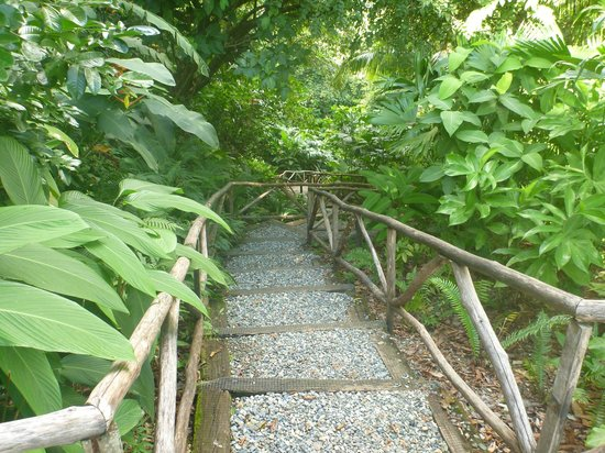 Lapa Rios Ecolodge Osa Peninsula:                                     Path to the Cabanas