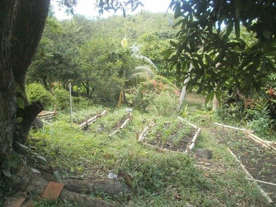 Belmont Estate:                   Herb Garden for the Restaurant