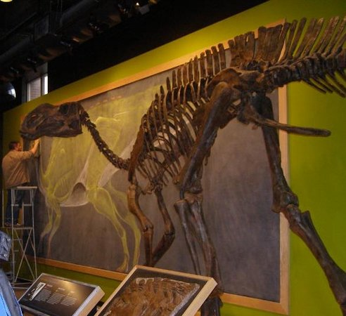 Academy of Natural Sciences of Drexel University: New dinosaur added to the collection.