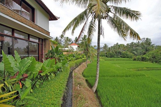 Ubud Green: Rice Paddy View