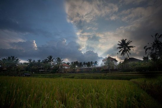 Ubud Green: View
