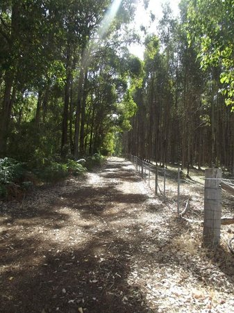 Diamond Forest Farm Stay:                                     The forest surrounding