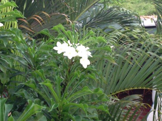 Hotel Coco Paraiso: Flores