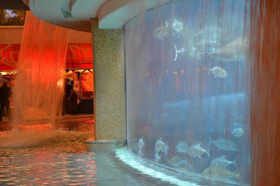Champagne Night Tour: Golden nugget pool/aquarium