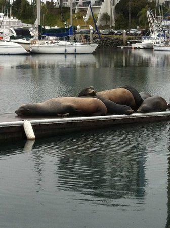 WorldMark Oceanside Harbor:                                     Sea Lions on the docks