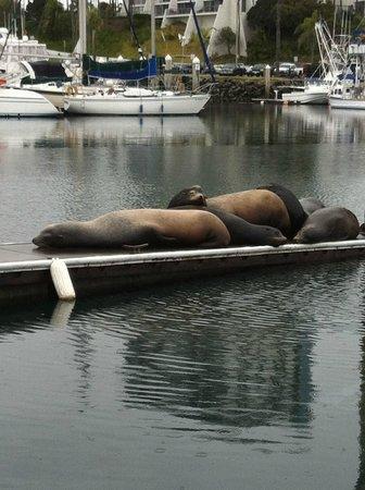 WorldMark Oceanside Harbor :                                     Sea Lions on the docks