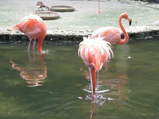 Iberostar Bavaro Suites:                   Flamingos no Restaurante Los Haitises