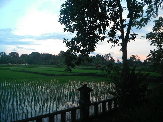 Green Field Hotel and Bungalows:                   View of the rice fields- Green Field Hotel