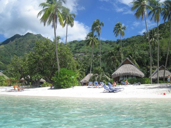 Sofitel Moorea Ia Ora Beach Resort:                   beach