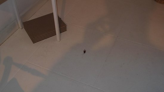 The Sun House:                                                       cockroach in our room (sorry too small her