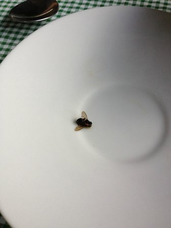 The Sun House:                                                       bee in the coffee press