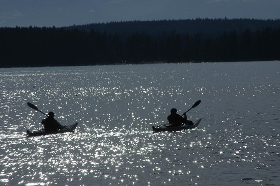 Quadra Island Kayaks - Day Tours: Sparkling ocean moments....