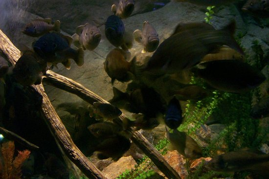 Aquarium picture of sea life aquarium arizona tempe Arizona mills mall aquarium