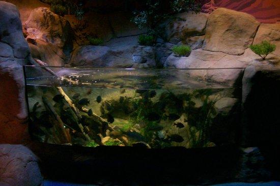 Aquarium Picture Of Sea Life Aquarium Arizona Tempe