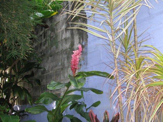 The Lotus Garden Hilo:                                     Lotus Garden