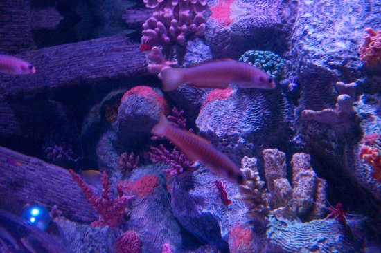 Picture Of Sea Life Aquarium Arizona Tempe Tripadvisor