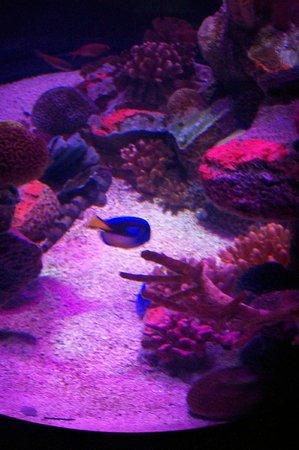 Sea Life Aquarium Arizona Tripadvisor
