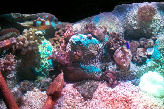 Picture Of Sea Life Aquarium Tempe Tripadvisor