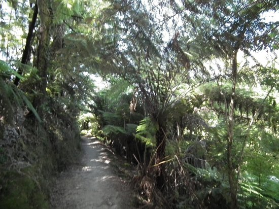 Wilsons Abel Tasman: Typical view of the forest tracks