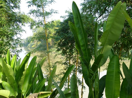 Tonnam Homestay:                                     végétation luxuriante