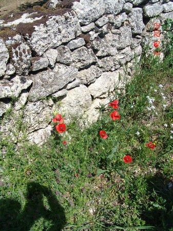Les Terrasses du Luberon: Bonnieux outskirts