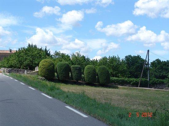 Les Terrasses du Luberon: Road to Château La Canorgue