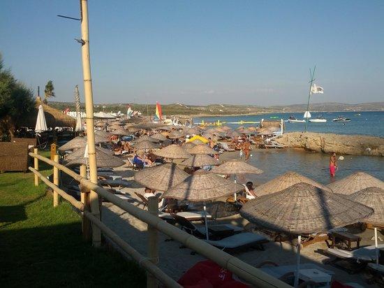 Fun Beach Club :                   tiki bar by palm restourant @fun beach