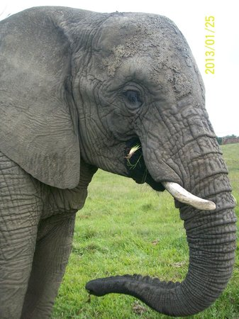 Knysna, South Africa:                   Nandi, all the way from Vaalwater
