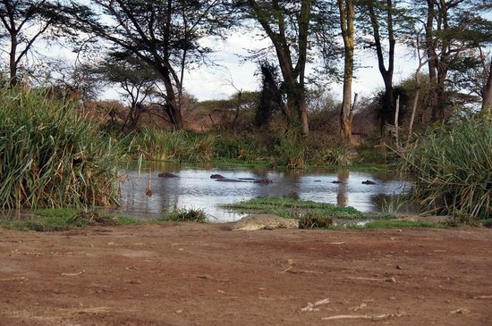 Voyager Ziwani, Tsavo West:                   safari a piedi