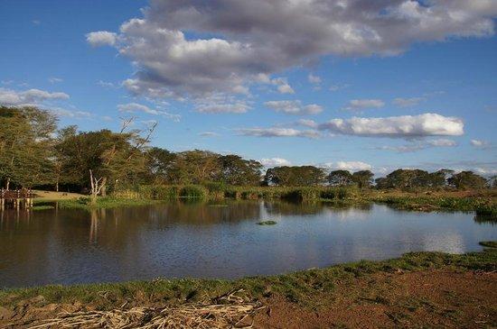 Voyager Ziwani, Tsavo West:                   vista del laghetto