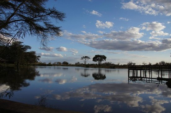 Voyager Ziwani, Tsavo West:                   laghetto all'alba