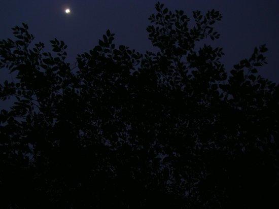Honey Valley Estate:                                     night