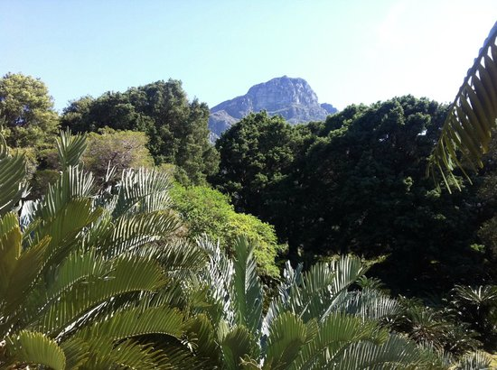 3 Picture Of Kirstenbosch National Botanical Garden Newlands Tripadvisor