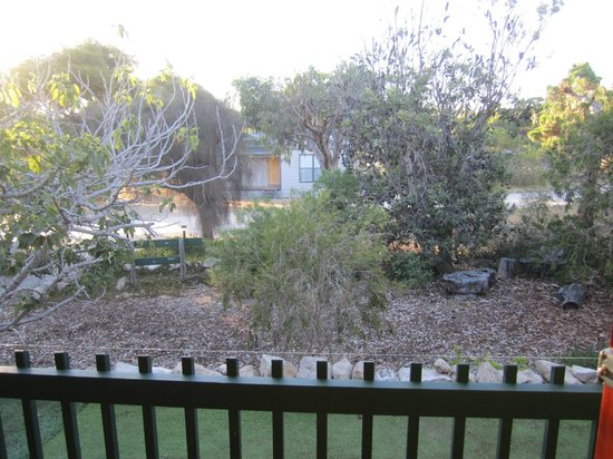 The Fig Tree : View from the patio