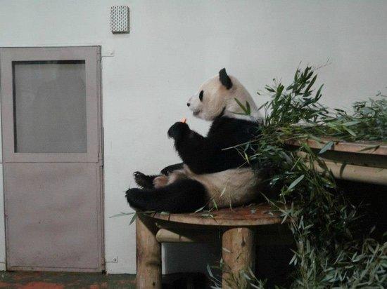 Holiday Inn Edinburgh:                   Great visit to the Pandas