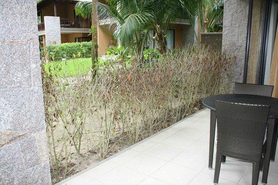 Constance Ephelia: landscaping masterpiece