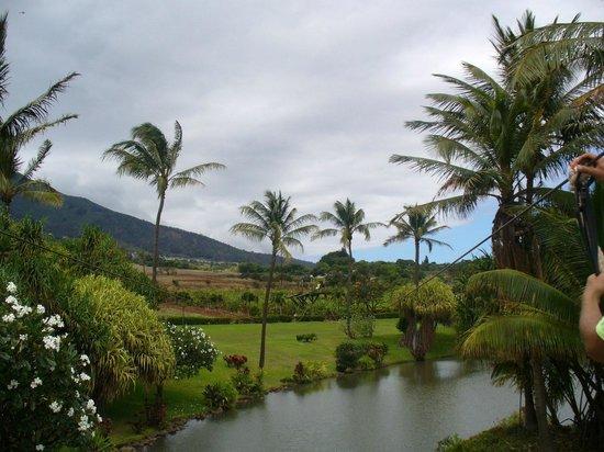 Maui Zipline Company:                   View from platform.