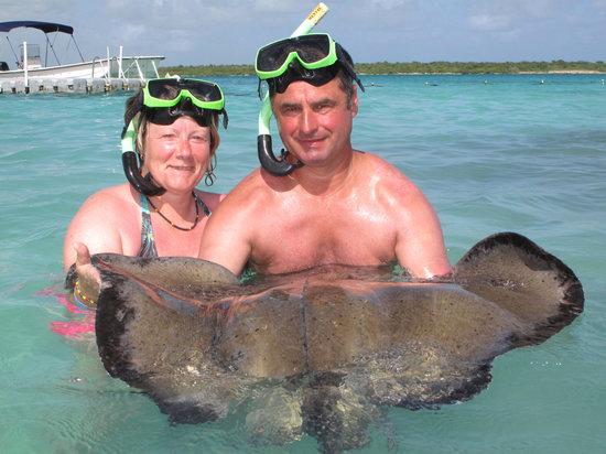 Swimming with Stingrays in Antigua - Picture of Antigua, Antigua and ...