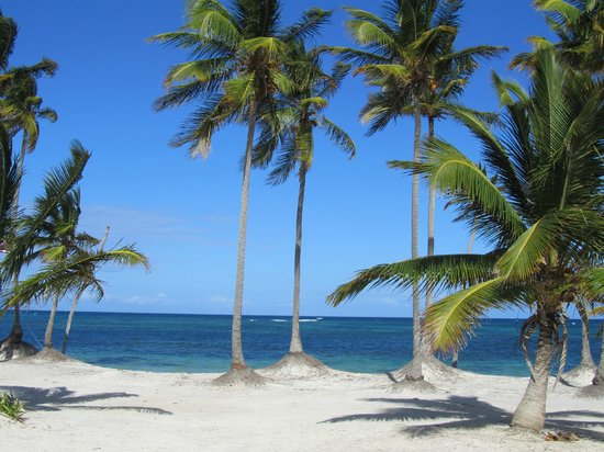 Catalonia Bavaro Beach, Casino & Golf Resort:                                     White Sand Beaches. Quite shallow and could walk out a far d
