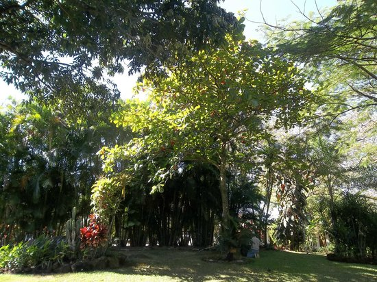 Hotel La Rosa de America:                   Trees