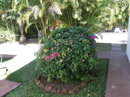 Hotel La Rosa de America:                   One of the bushes on the grounds