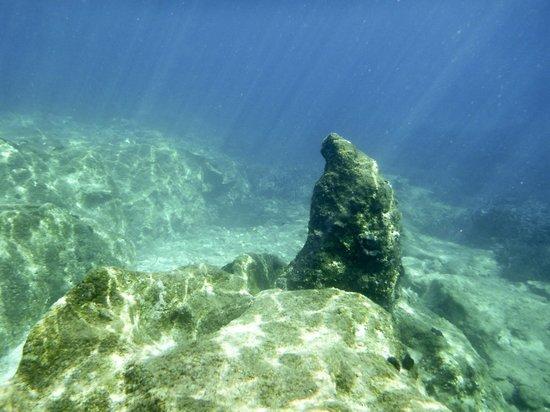 Kassiopi:                   Подводный мир