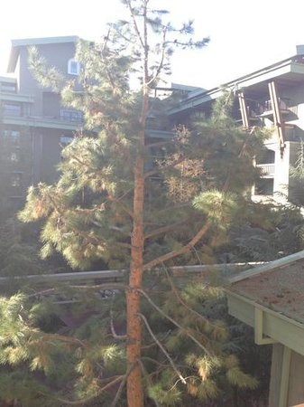 Disney's Grand Californian Hotel & Spa :                   beautiful woods view room 3148