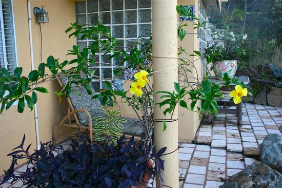 Lion's Gate Getaway: Lush plants and two lounge chairs for stargazing