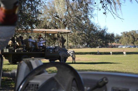 Giraffe Ranch: Shaded, comfortable safari vehicles